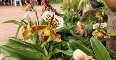 orquideas-recinto-del-pensamiento-manizales-30