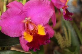 orquideas-recinto-del-pensamiento-manizales-32