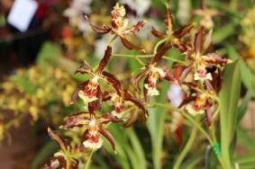 orquideas-recinto-del-pensamiento-manizales-35