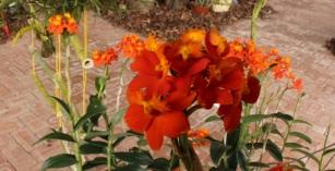 orquideas-recinto-del-pensamiento-manizales-38