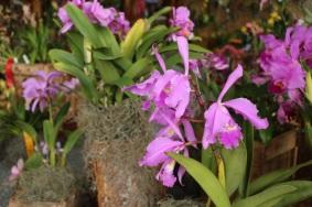 orquideas-recinto-del-pensamiento-manizales-4