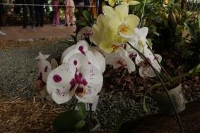 orquideas-recinto-del-pensamiento-manizales-40