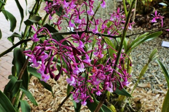 orquideas-recinto-del-pensamiento-manizales-42