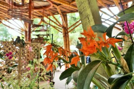 orquideas-recinto-del-pensamiento-manizales-45