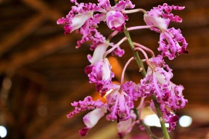 orquideas-recinto-del-pensamiento-manizales-46