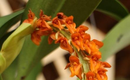 orquideas-recinto-del-pensamiento-manizales-47