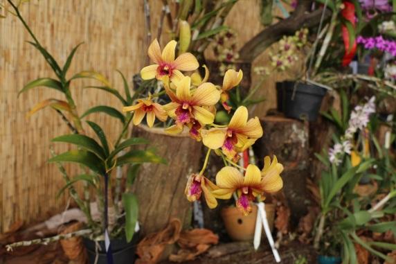 orquideas-recinto-del-pensamiento-manizales-49