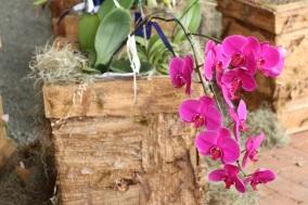 orquideas-recinto-del-pensamiento-manizales-5