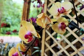 orquideas-recinto-del-pensamiento-manizales-50