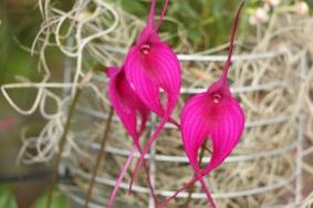 orquideas-recinto-del-pensamiento-manizales-51
