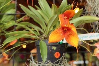 orquideas-recinto-del-pensamiento-manizales-52