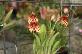 orquideas-recinto-del-pensamiento-manizales-55