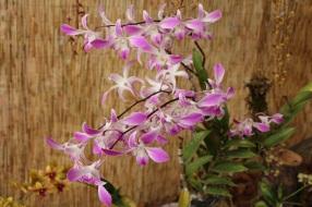 orquideas-recinto-del-pensamiento-manizales-56