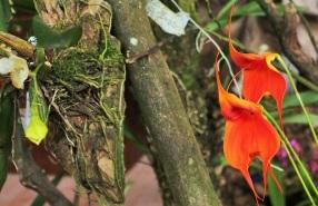orquideas-recinto-del-pensamiento-manizales-57