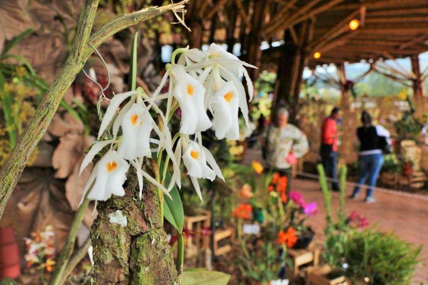 Exposición de Orquídeas en el Recinto delPensamiento.