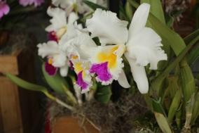 orquideas-recinto-del-pensamiento-manizales-6