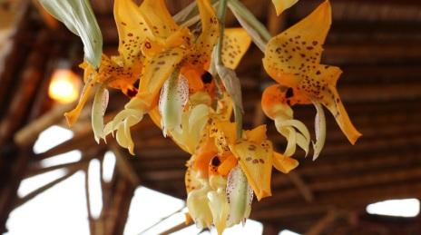 orquideas-recinto-del-pensamiento-manizales-61
