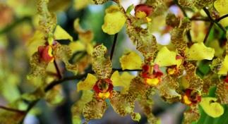 orquideas-recinto-del-pensamiento-manizales-63