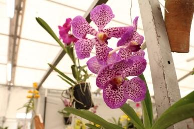 orquideas-recinto-del-pensamiento-manizales-66