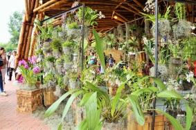 orquideas-recinto-del-pensamiento-manizales-7