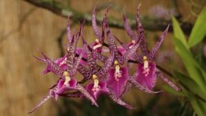 orquideas-recinto-del-pensamiento-manizales-8