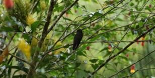 13-tatama-parques-naturales-finca-montezuma-choco-colibries
