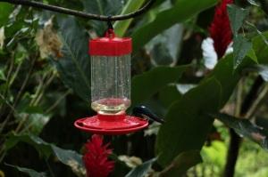14-tatama-parques-naturales-finca-montezuma-choco-colibries