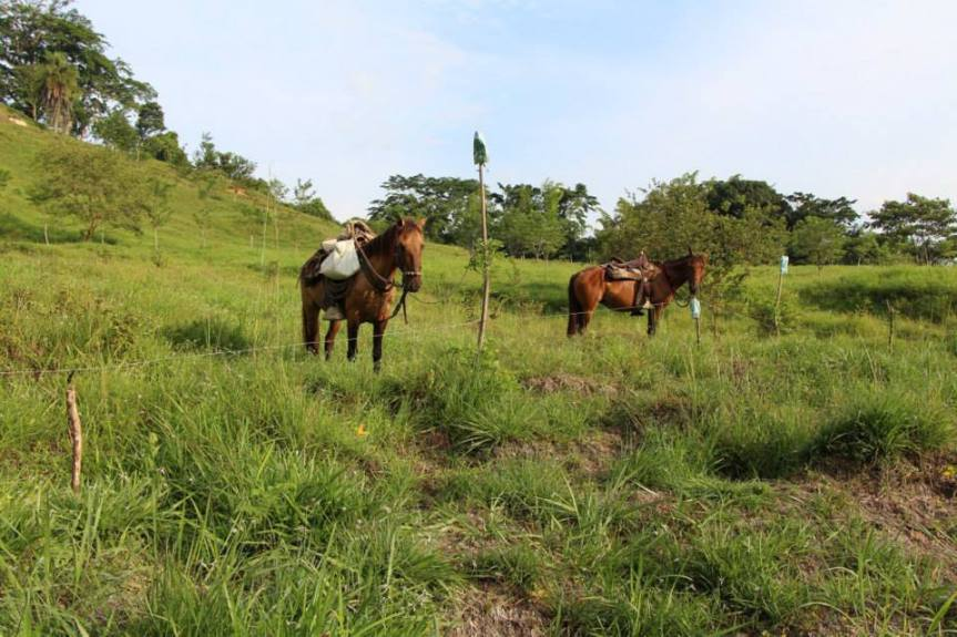 los-caballos-de-la-finca-altomira