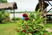 rio-amazonas-reserva-natural-victoria-regia-10
