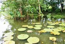 rio-amazonas-reserva-natural-victoria-regia-7
