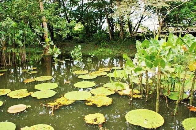 rio-amazonas-reserva-natural-victoria-regia-8
