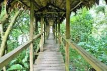 rio-amazonas-reserva-natural-victoria-regia-9