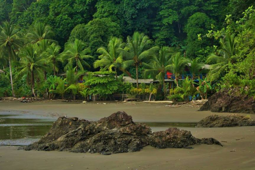 selva-del-choco-colombiano-2