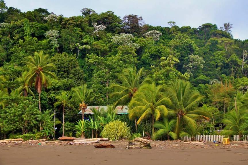 selva-del-choco-colombiano