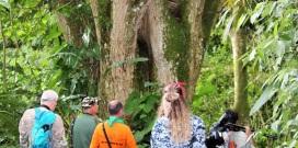 tinamu-birding-reserva-manizales-aviturismo-4