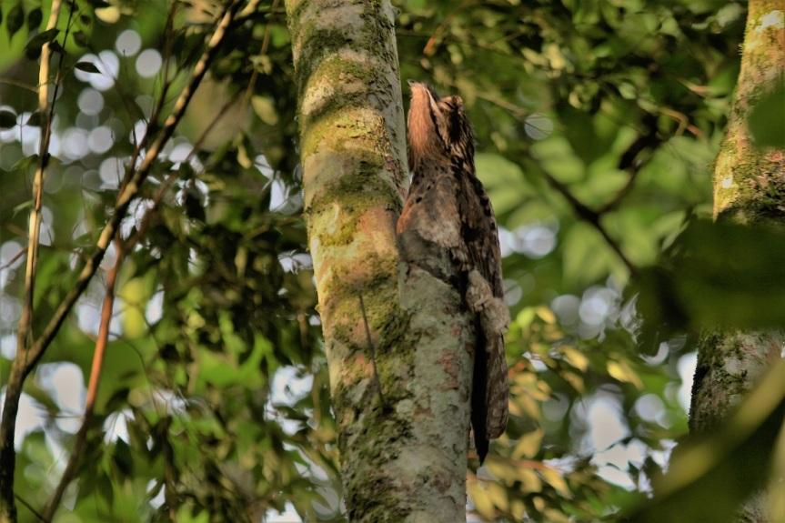 Observar aves en Manizales es facilisimo!!!