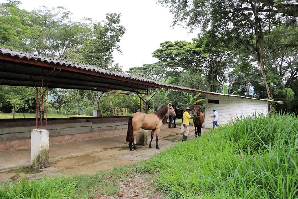 caballos-9